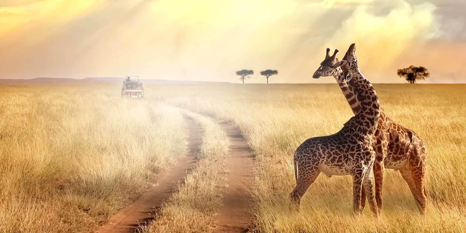 Africa homepage slider image