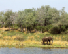 Africa THompsons Amanzi South Africa  - Spectacular South Africa Guided Tour