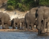 Chobe River Front - Elephant