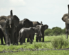Elephants in Tarangire National Park.gallery image.4  - The Great Migration