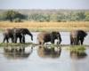 Chobe National Park Botswana.gallery image.12  - Botswana Wildlife Breakaway