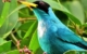 Sansara Surf & Yoga Resort  birdwatching
