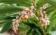 Belize, flowers