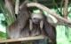 panama baby sloth