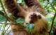sloth-Costa Rica